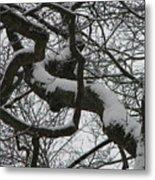 The Skyward Pathway In Snow Metal Print