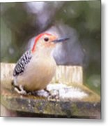 The Smiling Woodpecker  Metal Print
