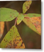 The Soft Intensity Of Fall 6210 H_2 Metal Print