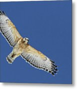 The Spirit Of The Hawk Metal Print