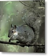 The Squirrel Metal Print