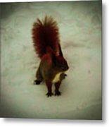 The Squirrel In The Winter Garden Metal Print