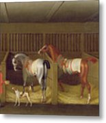 The Stables And Two Famous Running Horses Belonging To His Grace - The Duke Of Bolton Metal Print
