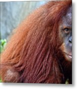 The Staring Contest Metal Print