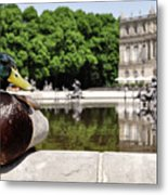 The Stately Duck Metal Print