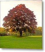 The Storybook Tree Metal Print