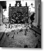 The Street Pigeons Metal Print by Perry Webster