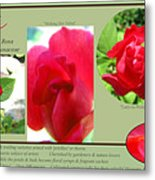 The Subject Is Roses Metal Print