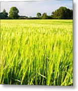 The Summer Crop Metal Print by Trevor Wintle
