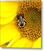 The Sun And The Bee Metal Print