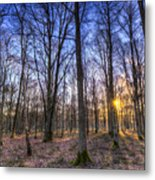 The Sun Ray Forest Metal Print