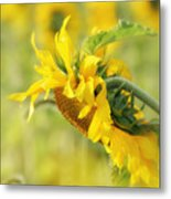 The Sunflower Metal Print