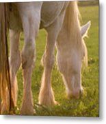 The Sunlight Caught In The Horse Tail Metal Print