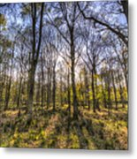 The Sunset Forest Metal Print