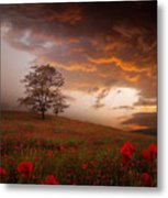 The Sunset Of The Poppies Metal Print