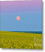 The Supermoon Rising Above A Canola Metal Print