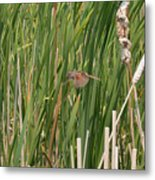 The Swamp Sparrow In-flight Metal Print