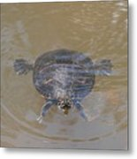 The Swimming Turtle Metal Print