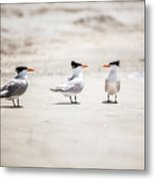 The Talking Terns Metal Print