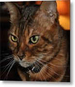 The Thinking Cat Metal Print