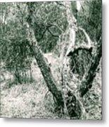 The Thinking Tree Metal Print