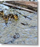 The Three Amigos Ducklings Metal Print