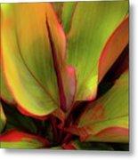 The Ti Leaf Plant In Hawaii Metal Print