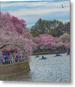 The Tidal Basin During The Washington D.c. Cherry Blossom Festival Metal Print