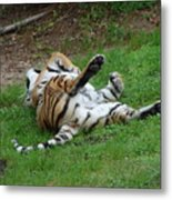 The Tiger At Play Metal Print