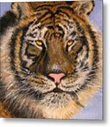 The Tiger, 16x20, Oil, '08 Metal Print