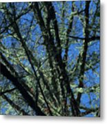 The Top A Glowing Tree Metal Print