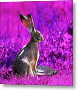 The Tortoise And The Hare . Magenta Square Metal Print
