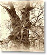 The Tree - Sepia Metal Print