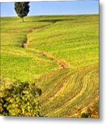 The Tree And The Furrows Metal Print
