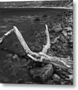 The Tree In The Water. Metal Print