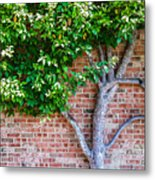 I Grow... Against All Odds  Metal Print