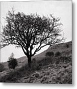 The Tree On The Fell Metal Print