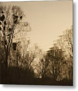 The Trees With Mistletoe. Metal Print