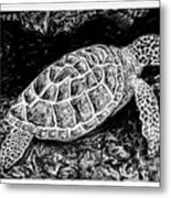 The Turtle Searches Metal Print