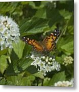 The Unnamed Butterfly Metal Print