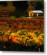 The Vines During Autumn Metal Print