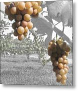 The Vineyard 2  Metal Print