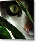 The  Voyeur Metal Print