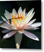 The Water Lily And The Dragonfly Metal Print by Sabrina L Ryan