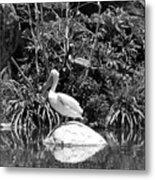 The Waterbirds Metal Print