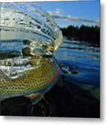 The Way Of The Trout Metal Print