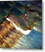 The White Feather - Iridescent Duck Metal Print