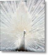 The White Peacock Metal Print