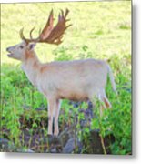 The White Stag 3 Metal Print