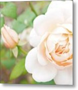 The White Washed Rose Metal Print